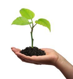 Endowment_Plant