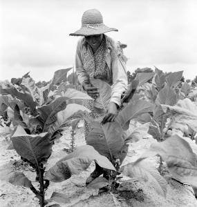 african-american-woman-farming-everett